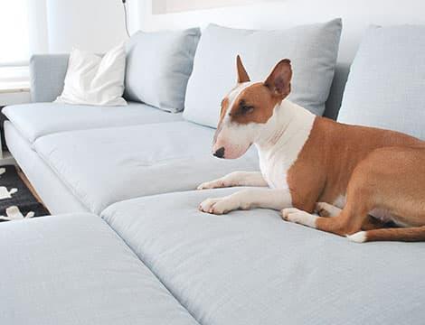 herringbone pebble on ikea soderhamn sectionals sofa with dogs on it slipcover comfort works