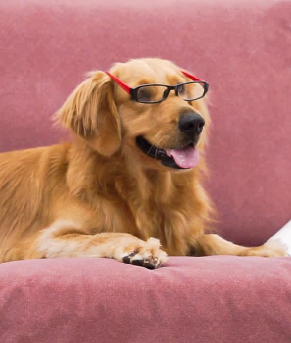 Fundas a prueba de gatos y perros