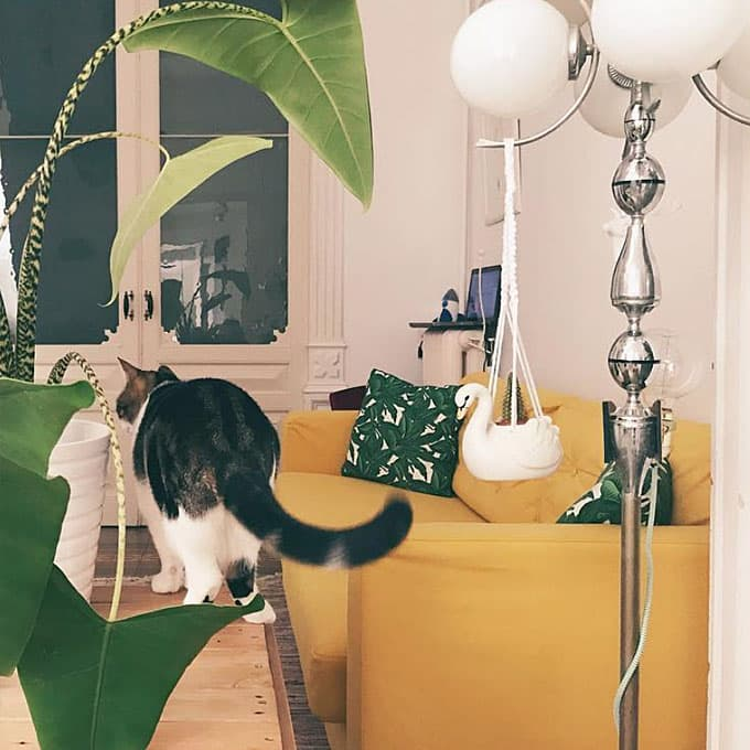 Cat in a living room