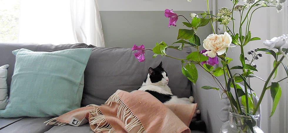 Jess's Cat on Sofa